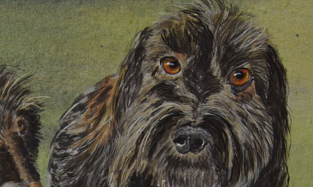 ProjektTreppe_VN_Hunde_Portrait2